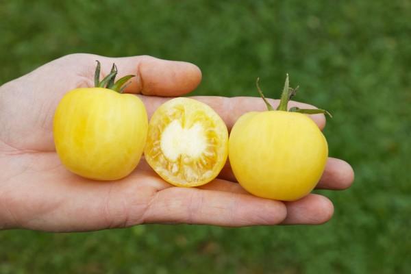 BIO Saatgut Salattomate Weißer Pfirsich