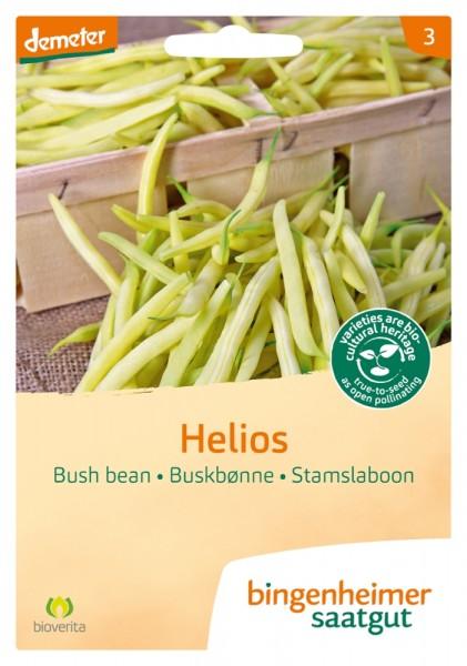 BIO Saatgut Buschbohne Helios