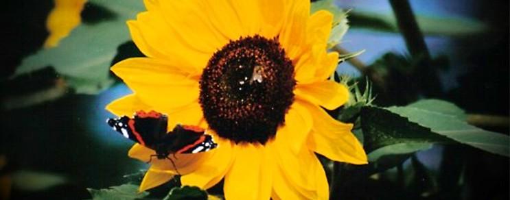 Pflanztipps im August