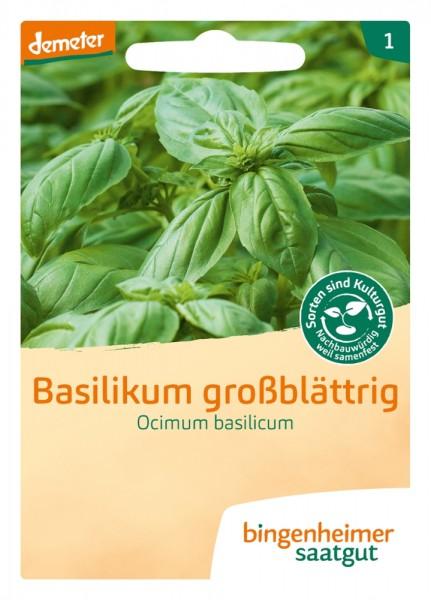 BIO Saatgut Basilikum großblättrig