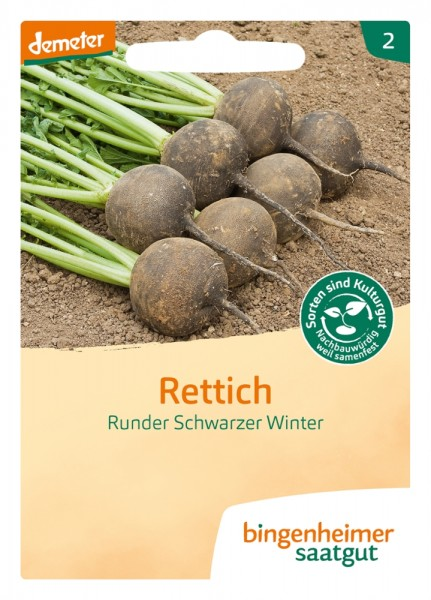 BIO Saatgut Rettich Runder Schwarzer Winter