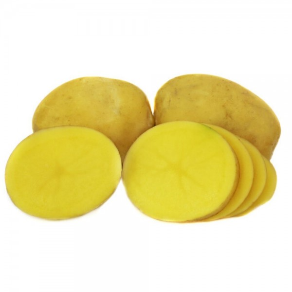 BIO Pflanzkartoffeln Sunita 2,5 kg
