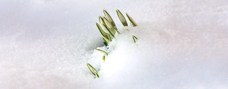 Pflanztipps im Januar