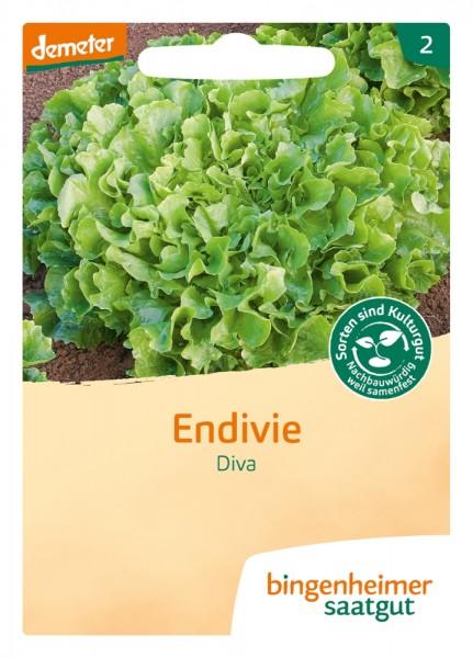 BIO Saatgut Endivie Diva