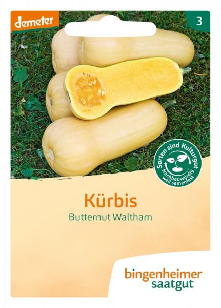 BIO Saatgut Kürbis Butternut Waltham