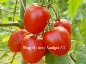 BIO Saatgut Tomate Quadro
