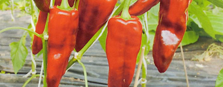 Peperoni & Paprika