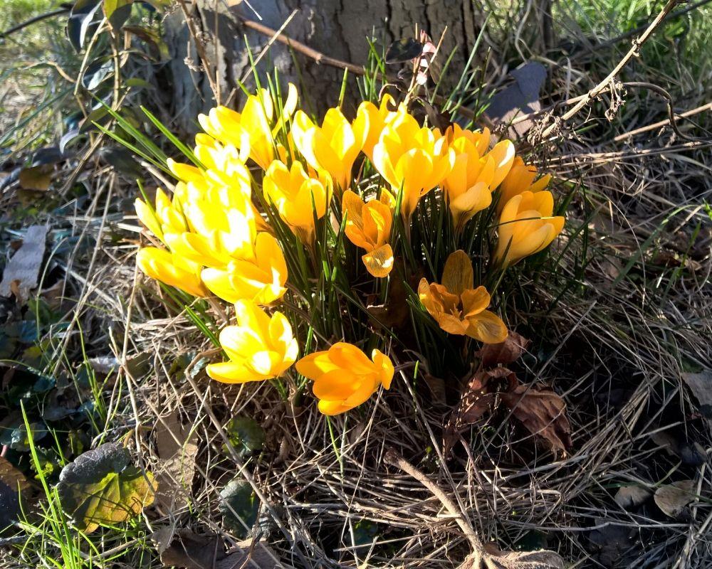 Pflanztipps im Februar