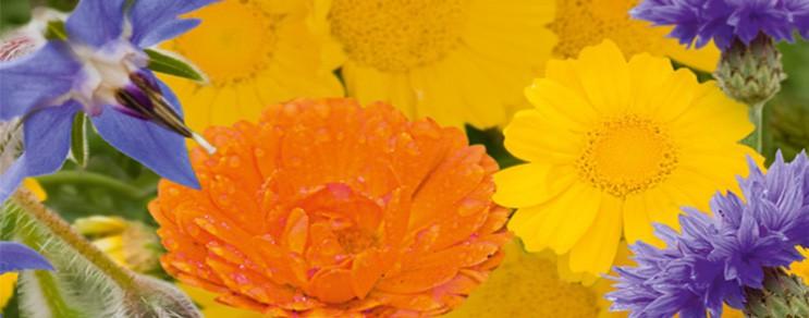 Blumenmischungen