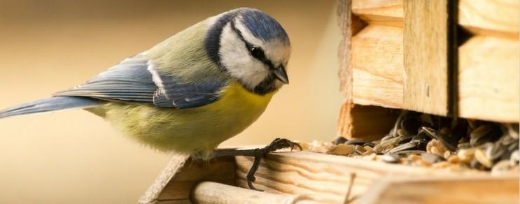 BIO Vogelfutter