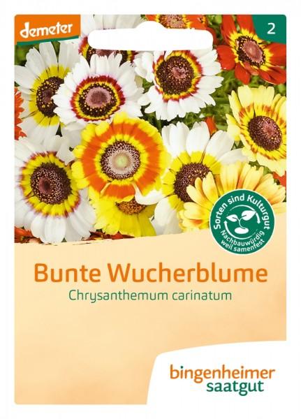 BIO Saatgut Bunte Wucherblume
