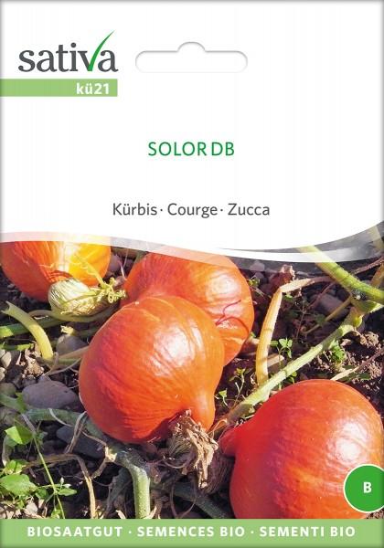BIO Saatgut Kürbis Solor DB