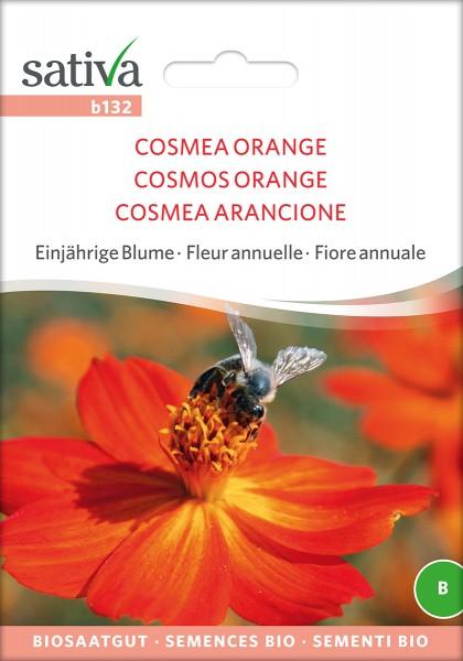 BIO Saatgut Cosmea orange