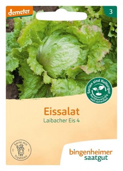 BIO Saatgut Eissalat Laibacher Eis 4